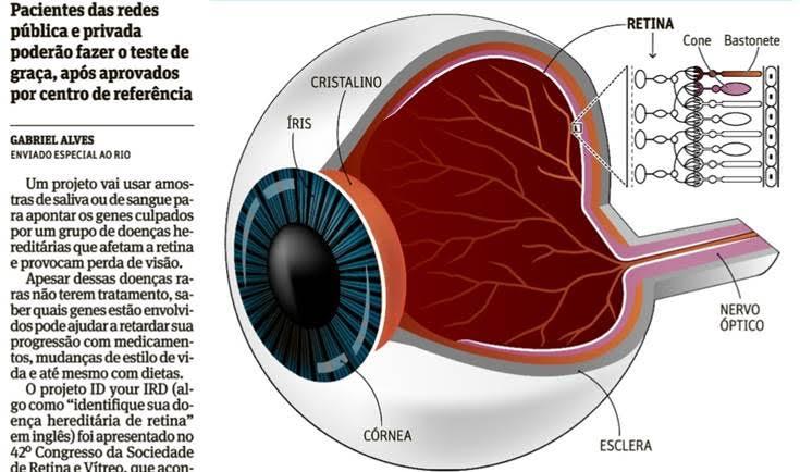Dr Rubens Belfort Jr fala sobre novos testes genéticos para doenças da retina